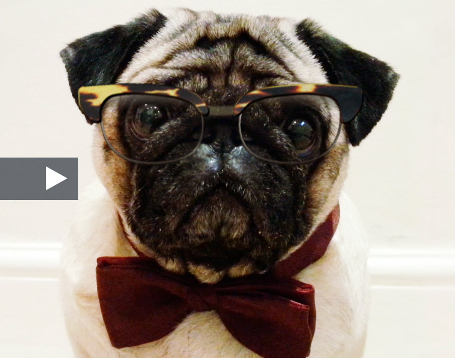 Pug Duke - www.VideoProductions.Pro
